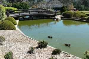 Bonsai Buddies trip to Mayfield Gardens